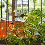 10 Tips to Make Indoor Garden Easily